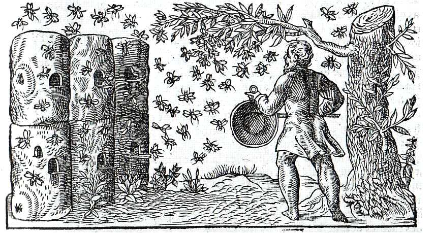 Animal-Insect-Bees-Medieval-Capturing-the-bees-black-and-white-engraving
